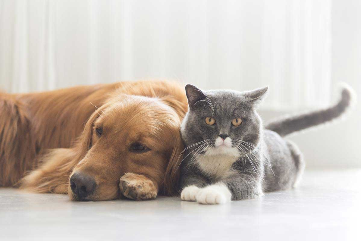about our veterinary practice Bridgetown, Nova Scotia BS C